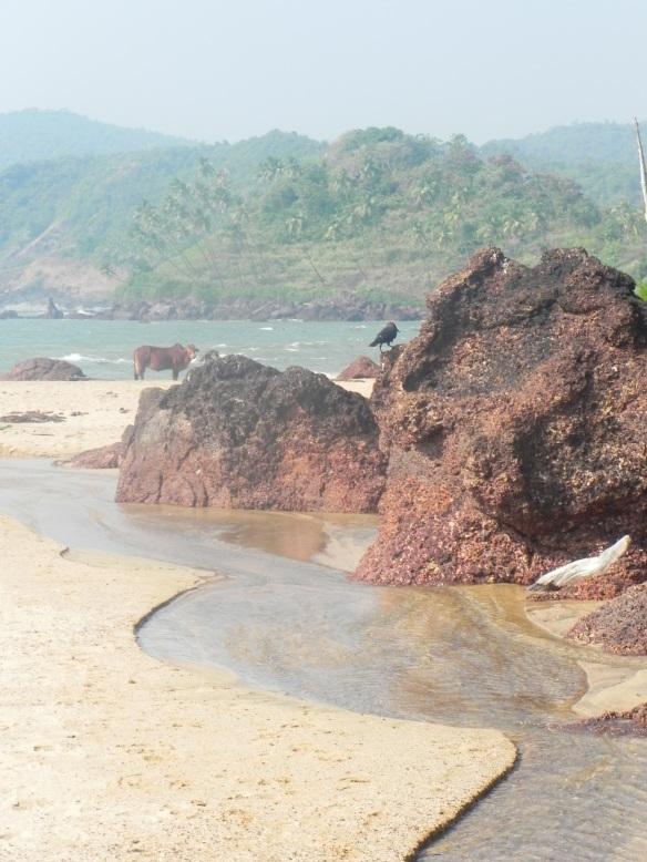 Cola Beach Goa India