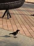 Animal Friendly Goa India