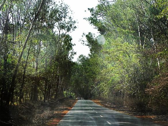 Landscape Goa india