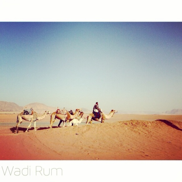 three camels riding in the deserts of wadi-rum jordan, bedouin man rides first camel