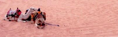 Wadi Rum WadiRum Jordan VisitJordan Camels Sand Bedouin Tea Camp Hike Mountain Blog TravelBlog Sand Feet Camel
