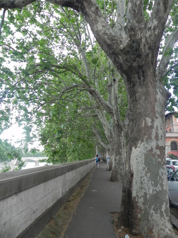 Side walk between the green trees at the rive river or tevere in rome