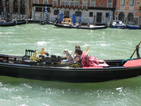 A gondola and a gondolier at the Grand Canal family lovers romantic with puppy