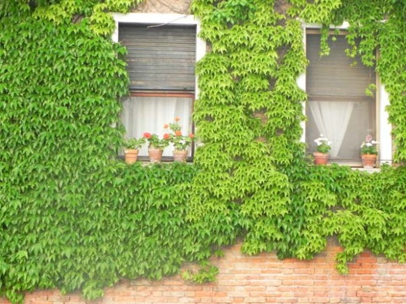 Architecture in venice is breathtaking specially with the beautiful cute little windows and decorations art is in everything greenery