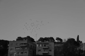 birds flying praying during sunset