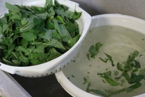 A Middle-Eastern Arabian dish Mulukhiah Mloukhieh green leaves vegetables with rice