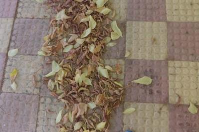 leaves in Amman Jordan