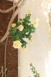 Authentic roses