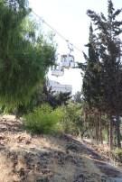 Forest Amman Jordan Street photography