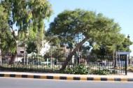 Webdeh Area Amman Jordan Urban Paris Circle