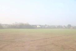 Fields of greenery