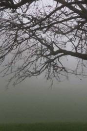 Winter cold foggy switzerland