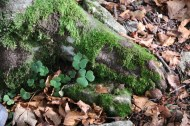Forest at Tannenheim Oberbalmberg, Solothurn (Switzerland)