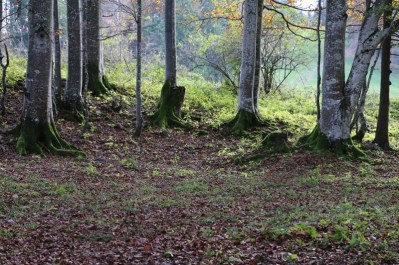 Woods and trees at Tannenheim Oberbalmberg, Solothurn (Switzerland)