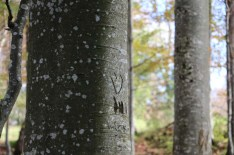 Trees at Tannenheim Oberbalmberg, Solothurn (Switzerland)