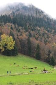 Woods at Tannenheim Oberbalmberg, Solothurn (Switzerland)