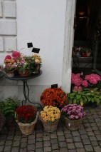 Baroque city Medieval town flowers