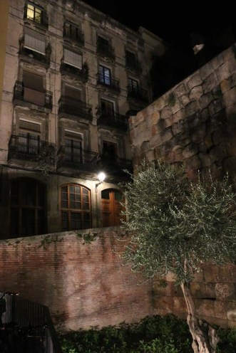 Olive tree Nightlife Barcelona Architecture Spain