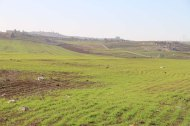 Greenery in Madaba Jordan
