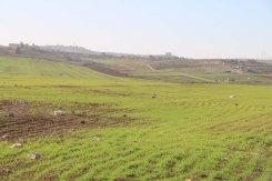 Greenery in Madaba Jordan