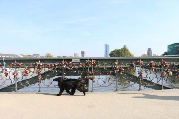 Love Lock Bridge in Frankfurt with Dog passing by