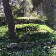 Garden of Khalid shoman foundation