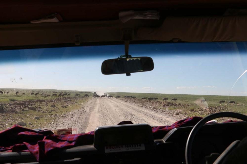 ride, jungle, tanzania, safari, Serengeti
