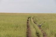 bird, jungle, tanzania, safari