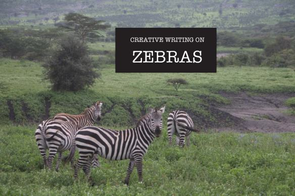 zebra, animal, jungle, tanzania, safari