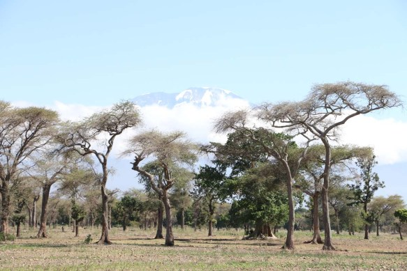 Overlooking Kilmanjaro, trees, tanzania, climb