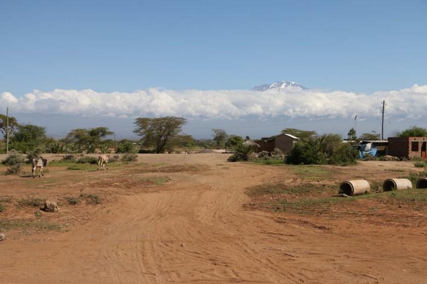 Nature, African, Tanzanian, Moshi, Tanzania, Kilimanjaro