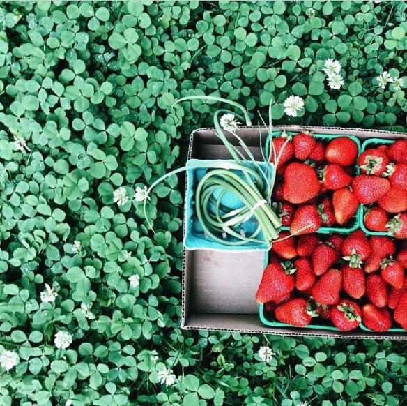 strawberries, leaves, green, foodie