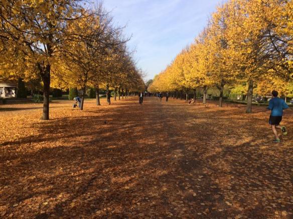 Regent Park, London, Automn